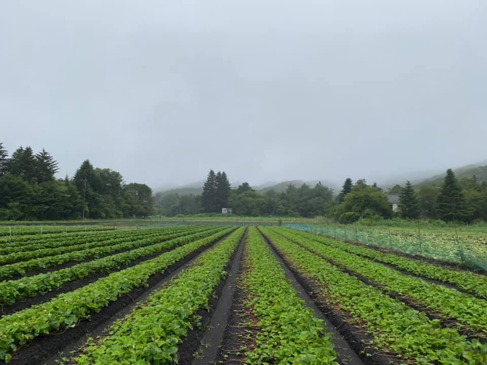 軽井沢も雨続き